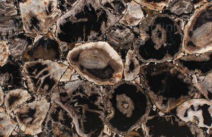 FANCYBLACK PETRIFIED WOOD